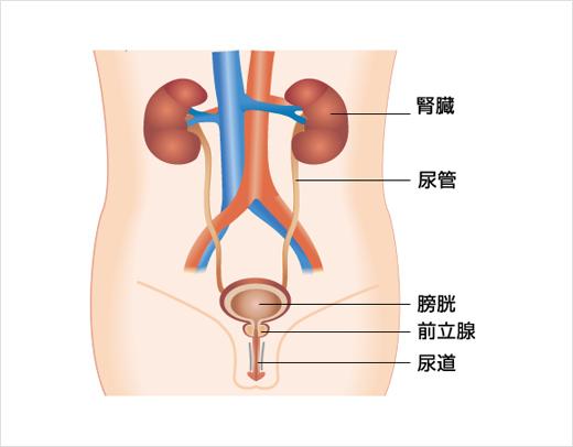 後 痛み 射精 尿